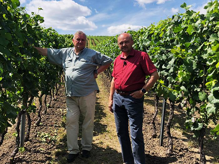 Milovníci vína natáčen ve vinohradu vinařství Dvořáček LTM